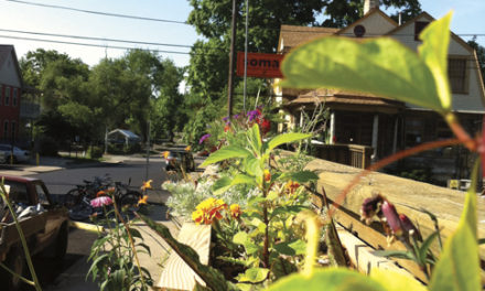Bread & Roses Gardens: Purveyors of Edible Plants