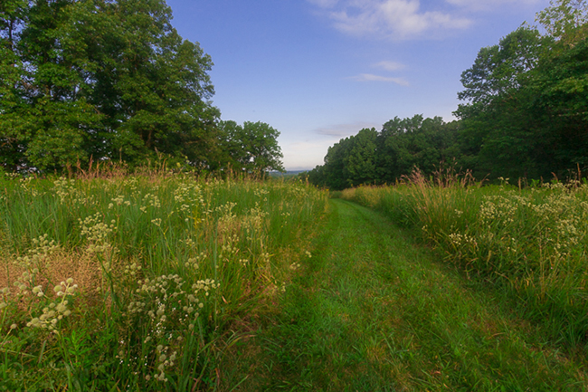 Phyllis Schwitzer's three-acre prairie garden provides essential cover from predators for birds and butterflies. Photo by James Kellar
