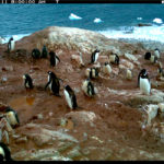Citizen Scientist: Stay Cool with 'Penguin Watch'